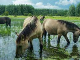 Bron: Fokko Erhart www.wildernisfoto.nl